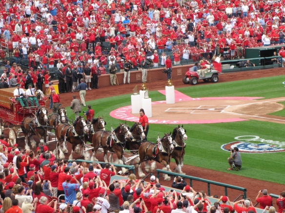 Clydesdales - Kelly
