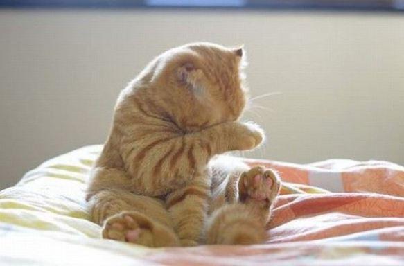 cute_animals_funny_cat
